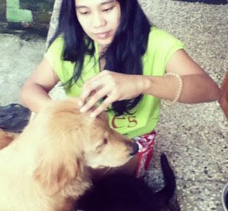 Cara Paling Efektif Menghilangkan Kutu Anjing