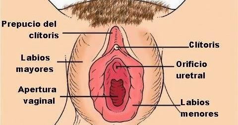 diccionario de biologia ¿quÉ es clÍtoris