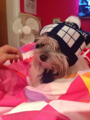 Trixie Dog Wearing a Beanie