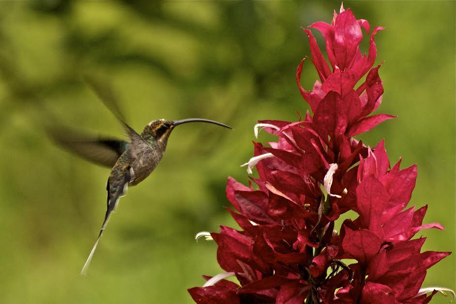 Adquiere Aqui Estos Fondos De Pantalla Con Flores Hermosas: BANCO DE IMÁGENES: Fotografías De Mariposas En Las