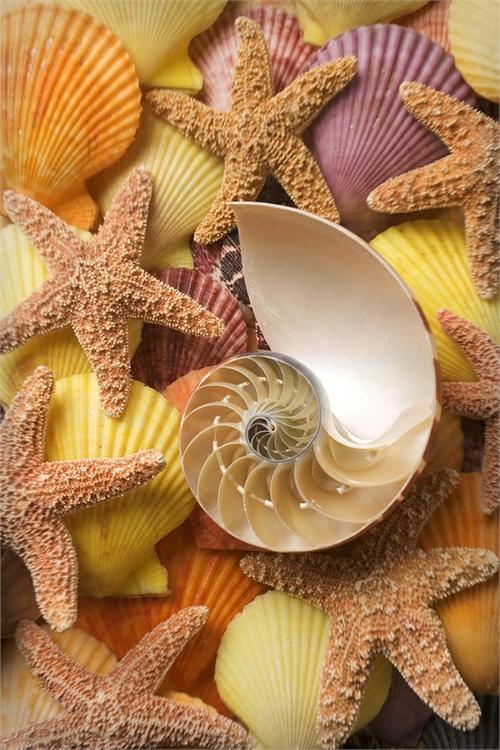 10 Beautiful Starfish & Sea Shell Pictures   Most Beautiful