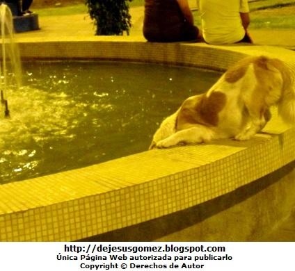 Foto de perro refrescándose en una pileta. Foto de perro tomada por Jesus Gómez