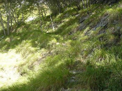 tratto erboso del sentiero dei cavatori