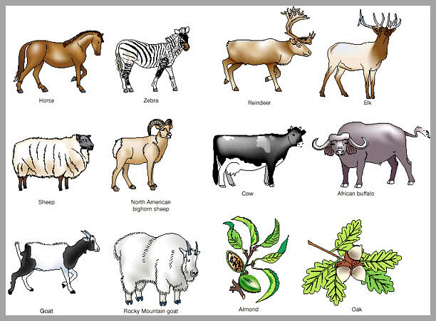 Evolution consequences and future of plant and animal domestication domestication interests us as the most momentous change in holocene human history why did it operate an so few wild species in so few geographic areas fandeluxe Images