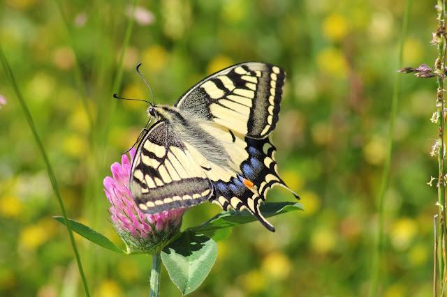 I leptir je nekad bio smešna gusenica