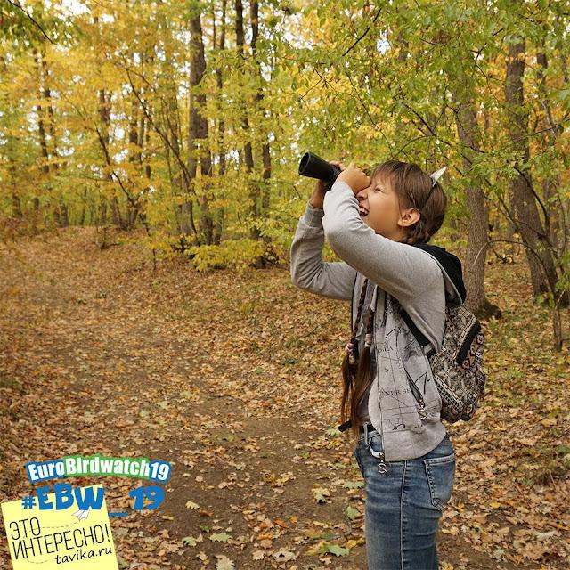 наблюдения птиц для детей