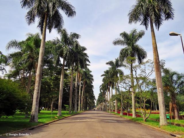 Foto da Alameda das Palmeiras na entrada do Jardim Botânico de São Paulo - Água Funda