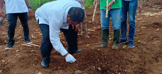 Adam Rahayaan dan Usman Tamnge Tanam Perdana di Kawasan Pertanian Baru Fanil