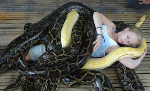 Pengobatan Alternatif dengan Hewan Beracun