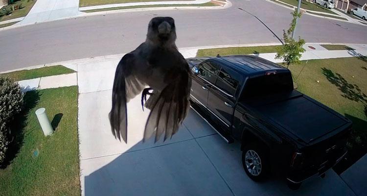 """Pássaro """"flutuar"""" em frente à câmera"""