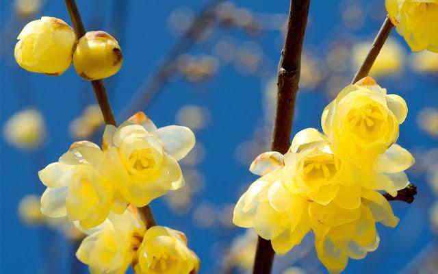 Takken met gele bloemen