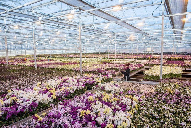 Invernadero vivero de orquídeas