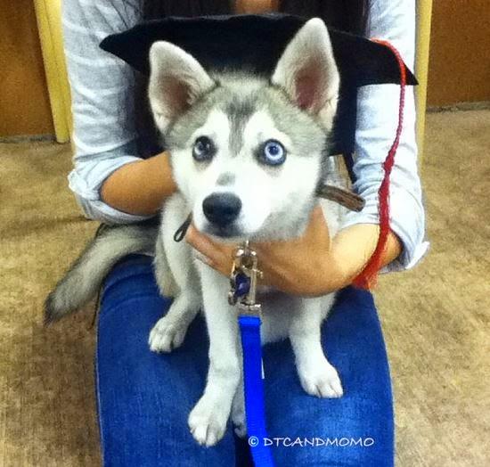 graduated puppy class