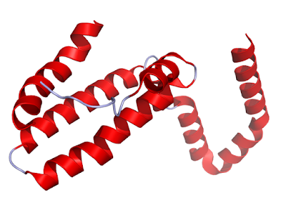 Crystal structure of IL-10