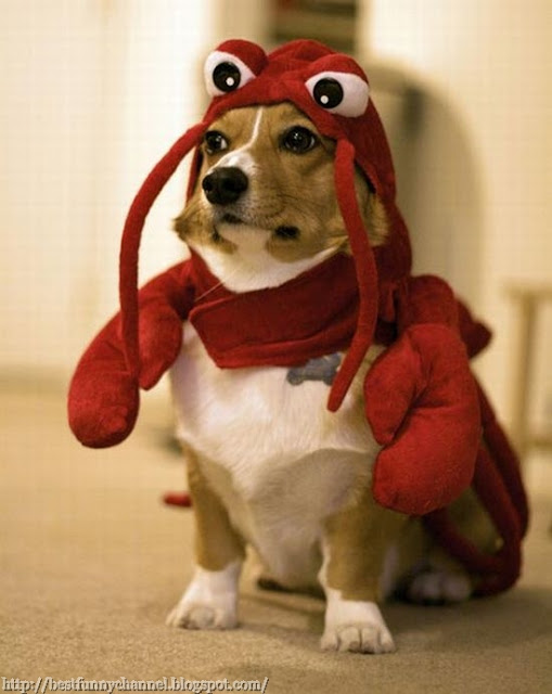 Dog dressed crab.