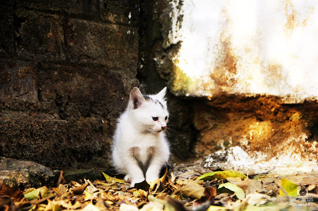 cute white little kittens photo