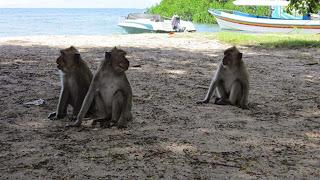 trip advisor pantai bahma