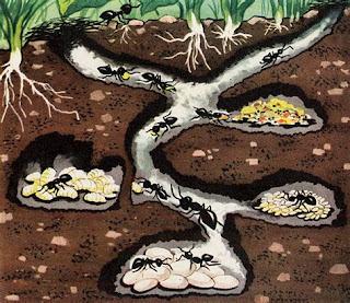 Le formiche operaie costruiscono, puliscono e curano il formicaio