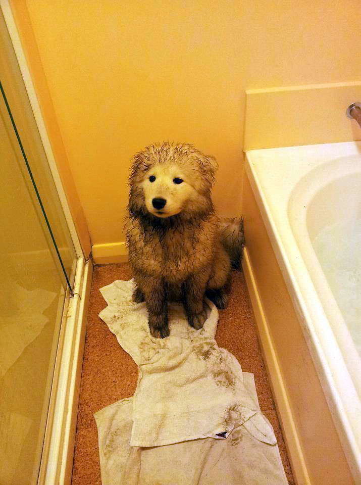 Cute dogs - part 208, funny dog picture, adorable dog image