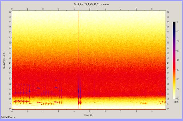 bat detector ultrasonic bird
