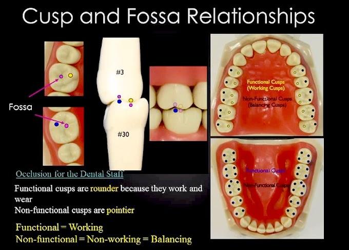 WEBINAR: Occlusion for Prosthodontics - Edilia Marshall, DMD, MAGD, AAACD