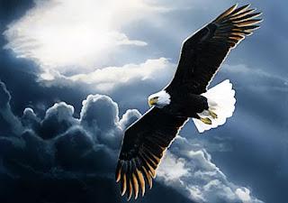 arti mimpi ketemu elang, arti mimpi digigit elang, arti mimpi dikejar elang, arti mimpi menangkap elang, arti mimpi melihat elang, elang jawa