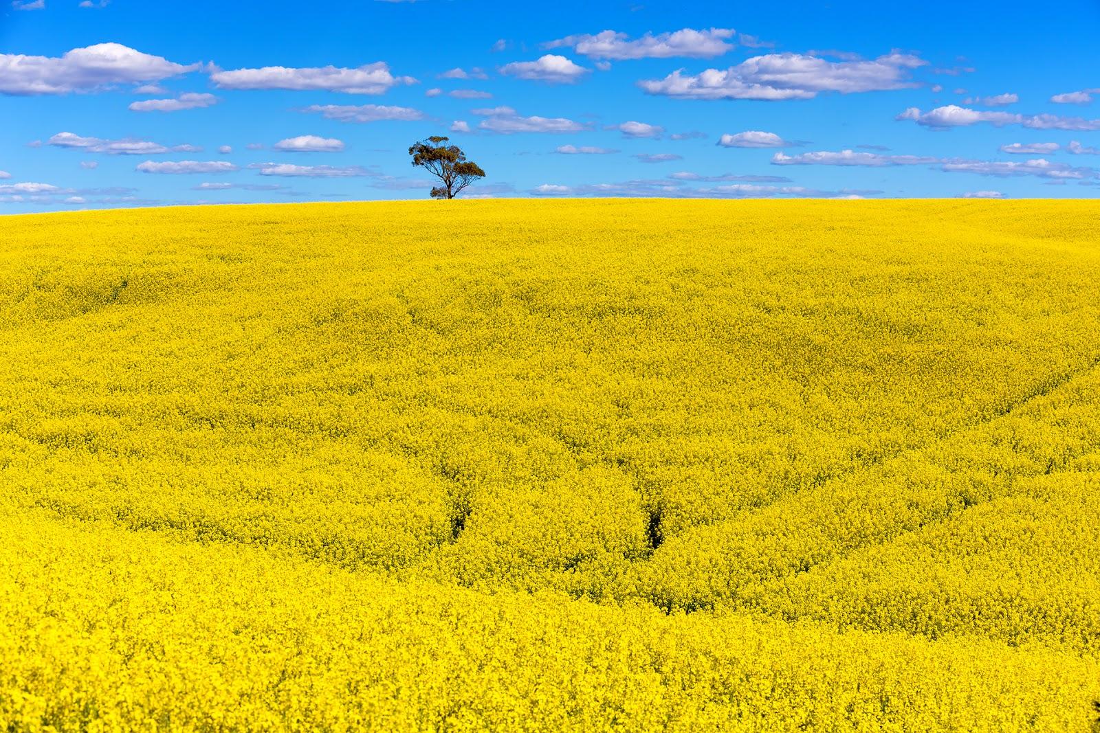Australia-Okolice Burra Burra