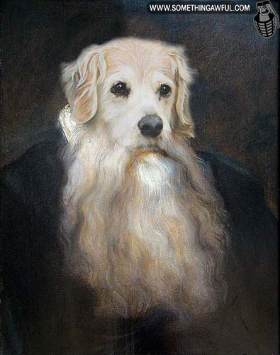 Beards Bearded Dog