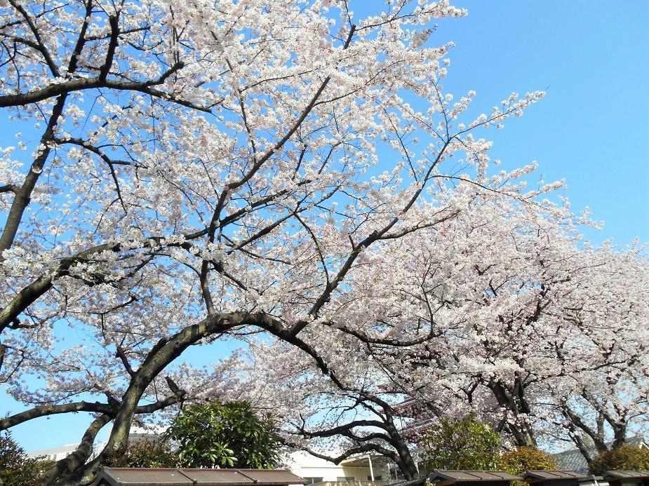 http://julafille.blogspot.com/2016/04/spring-pink-in-tokyo.html
