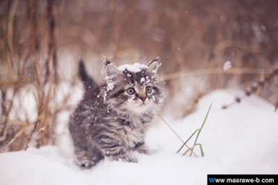 صور صور قطط كيوت 2020 خلفيات قطط جميلة جدا cats6.png
