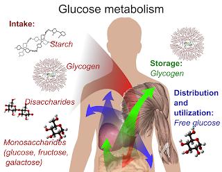 Manfaat Karbohidrat bagi Tubuh
