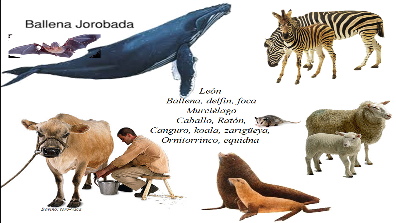 Angiología animal | Biología y ecología