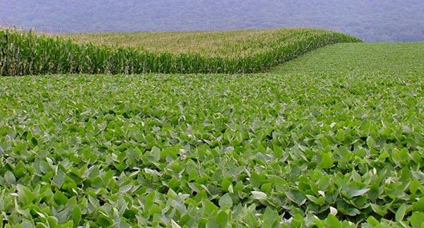 Texas Ag Stats |Texas Agriculture