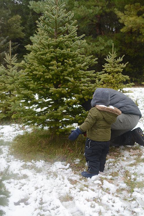 Getting a Christmas Tree, Tree hunt | My Darling Days
