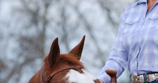 "Your Horse is More Than ""Just a Horse"""