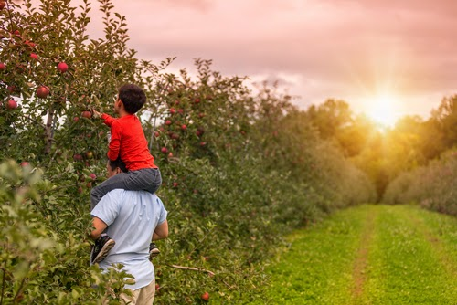 Orchard Picking Family Activity