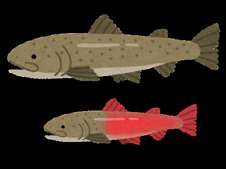 イトウのイラスト(魚)