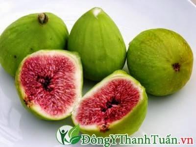 trái sung chữa bệnh dạ dày