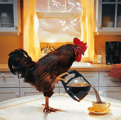 cock serving coffee