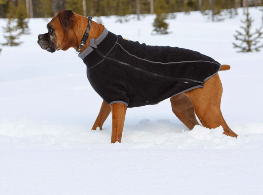 Best Warm Winter Dog Coats