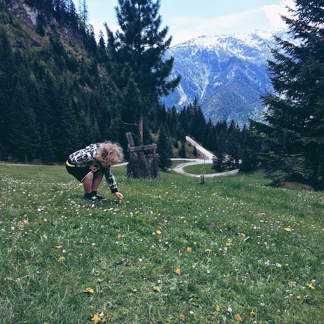 Buchauer alm, achensee, tirol, bergliebe, grinsestern, austria