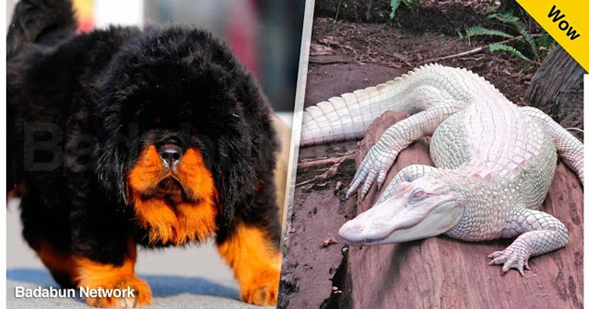mascotas caras extrañas mundo costosas selena gomez