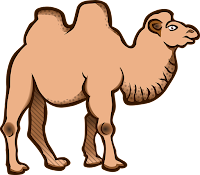 camel pic