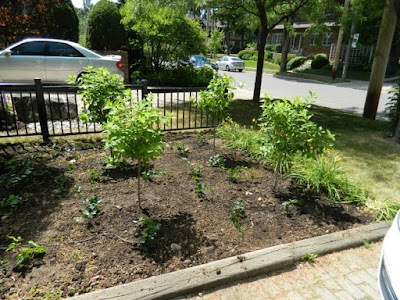 Mount Pleasant West garden renovation removing lawn after Paul Jung Gardening Services Toronto