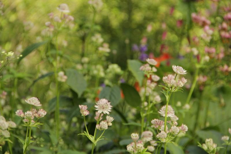 Visningsträdgården Hällans trädgårdsblogg: Naturlig trädgård