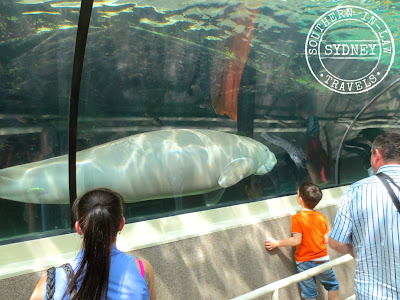 Sydney SEA LIFE Aquarium Review - Dugongs