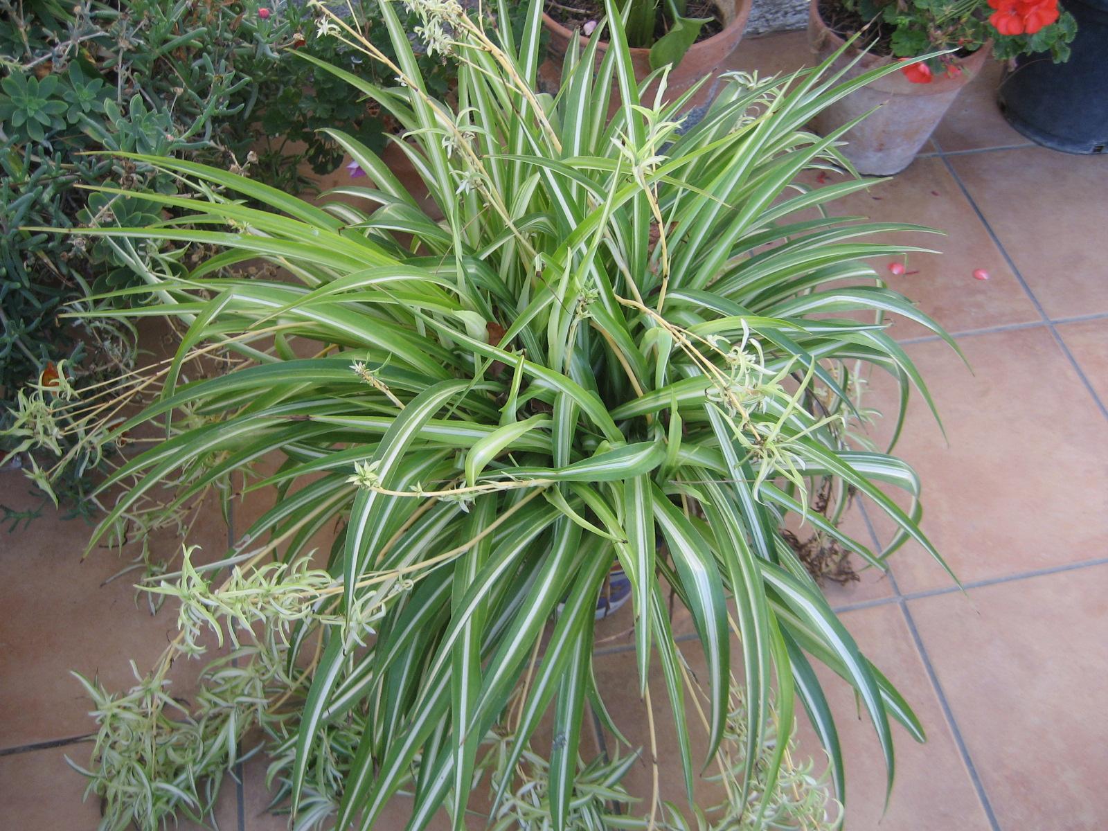 El huerto de balsas plantas de interior y exterior en macetas for Plantas en macetas para exterior fotos