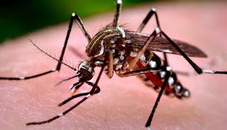 Casos de dengue crescem 264% no Brasil com 229 mil pacientes este ano. Doença mata 62 pessoas nas primeiras 11 semanas de 2109