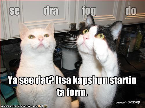 Interesting Pictures Funny: Funny Cats With Captions 2012