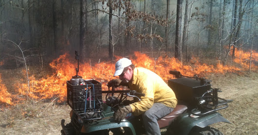 Growing Season Burns- One of the best Forest and Wildlife Management Tools? I think so!